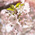 Tender Blossoms by Jennifer Rhoades