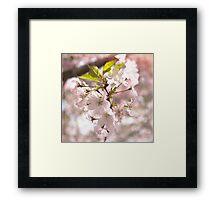 Tender Blossoms Framed Print
