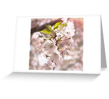 Tender Blossoms Greeting Card