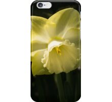 Sunny Pair - Glowing Mellow Yellow Narcissus Blooms iPhone Case/Skin