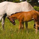 Foal - Feeding Time is Near! by Buckwhite