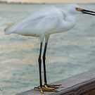 Just Hanging Out at the Pier by John  Kapusta