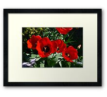 Late Spring Beauty Framed Print