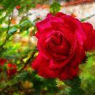 New Rose by jean-louis bouzou