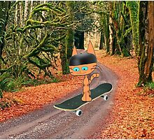 Cat On His SkateBoard Photographic Print
