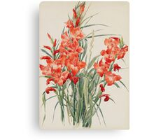 Vintage blue art - Charles Demuth - Red Gladioli Canvas Print