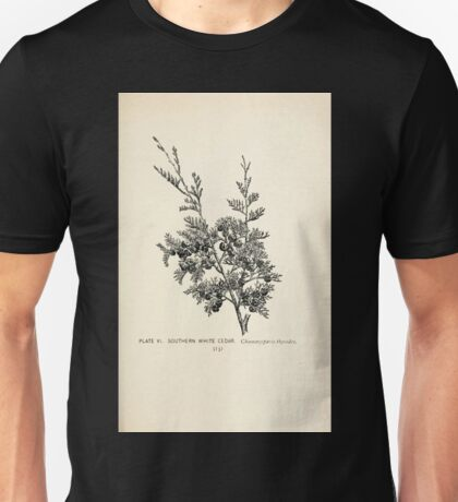 Southern wild flowers and trees together with shrubs vines Alice Lounsberry 1901 007 Southern White Cedar Unisex T-Shirt