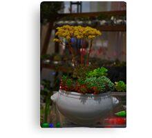 Maceta de plantas.... Canvas Print