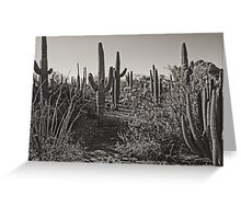 Cowboy country, Arizona Greeting Card