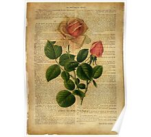 Botanical print, on old book page - flowers - roses Poster