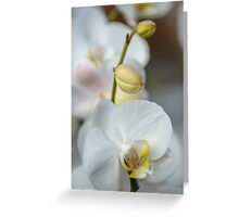 Vertical of White Orchid Flower Greeting Card