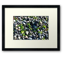 Seaweed and Rocks, Lopez Island Framed Print