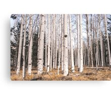 Birch Forest Watercolor Canvas Print