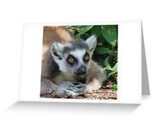 Ring-tailed Lemur Relaxing Greeting Card