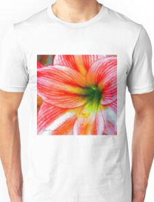 Candy-Cane Striped Amaryllis Unisex T-Shirt