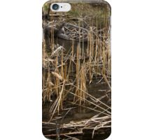 Spring At The Beaver Pond iPhone Case/Skin