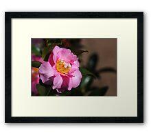 Camellia Dedication Framed Print