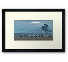 Mt. Buffalo morning  Framed Print