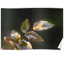 shining leaves Poster