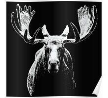 Bull moose white  Poster