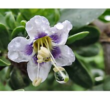 Flower With Dew Drop Photographic Print