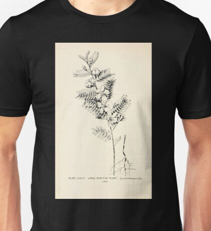 Southern wild flowers and trees together with shrubs vines Alice Lounsberry 1901 078 Large Sensetive Plant Unisex T-Shirt