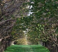 Trees - Country Victoria - Healesville Sticker