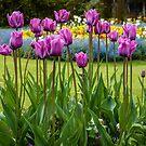 Pretty in Purple by vivsworld