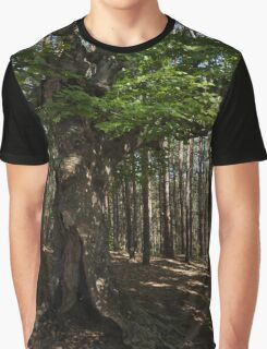 Trail Guardian - an Ancient Beech Tree in a Pine Forest Graphic T-Shirt