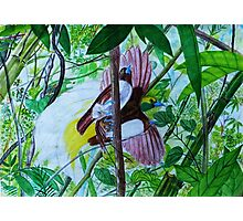Paradise Birds in Watercolor Photographic Print