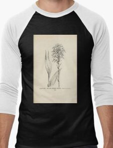 Southern wild flowers and trees together with shrubs vines Alice Lounsberry 1901 023 Yellow Fringed Orchid Men's Baseball ¾ T-Shirt