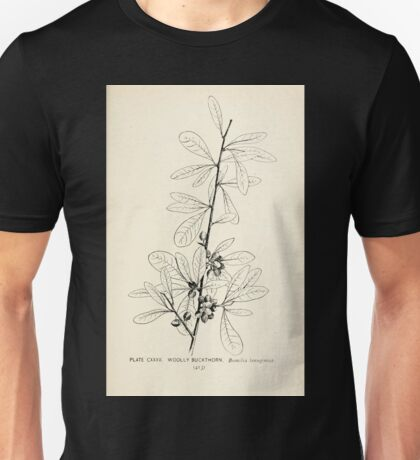 Southern wild flowers and trees together with shrubs vines Alice Lounsberry 1901 134 Wooly Buckthron Unisex T-Shirt