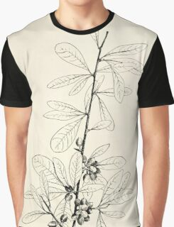 Southern wild flowers and trees together with shrubs vines Alice Lounsberry 1901 134 Wooly Buckthron Graphic T-Shirt