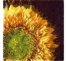 Sunflower Pencil Photographic Print