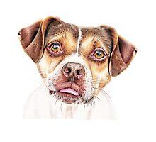 Lola - Rescue Pup Photographic Print