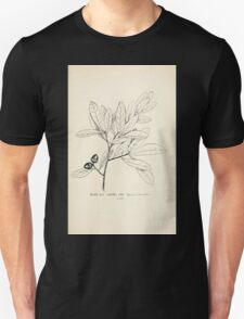 Southern wild flowers and trees together with shrubs vines Alice Lounsberry 1901 045 Laurel Oak Unisex T-Shirt