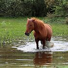 Wading in the pond by elaine pearson