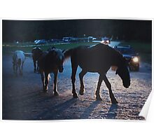 Light behind horses Poster