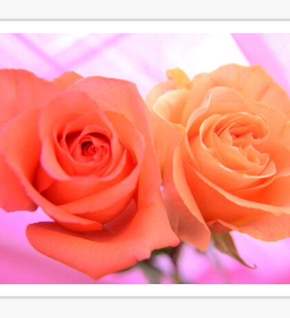 Peach and Pink Roses Sticker
