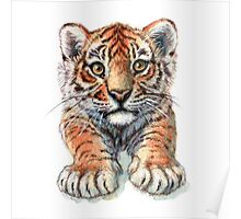 Playful Tiger Cub 907 Poster