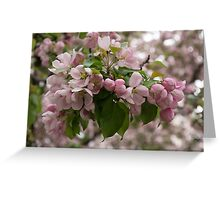 Blossoms and Buds - Springtime Apple Tree Greeting Card