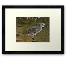 hunting - cazando Framed Print