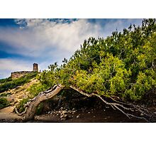 Tower and wind shaped tree at Cala el Charco Photographic Print
