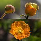 Spring first by Veikko  Suikkanen
