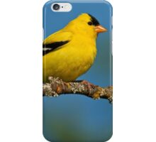 American Goldfinch Perched in a Tree iPhone Case/Skin