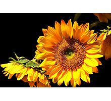 Bouquet of Sunflowers Photographic Print