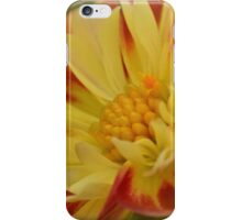 Variegated dahlia iPhone Case/Skin