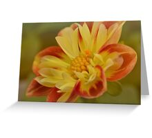 Variegated dahlia Greeting Card