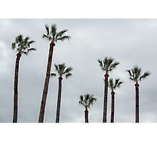 Exotic palms Photographic Print