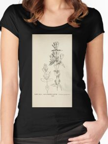 Southern wild flowers and trees together with shrubs vines Alice Lounsberry 1901 142 Five Flowered Gentian Women's Fitted Scoop T-Shirt